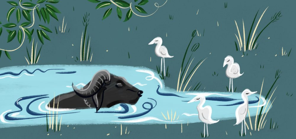 Digital travel illustration of a water buffalo in south goa by Jasmine Hortop